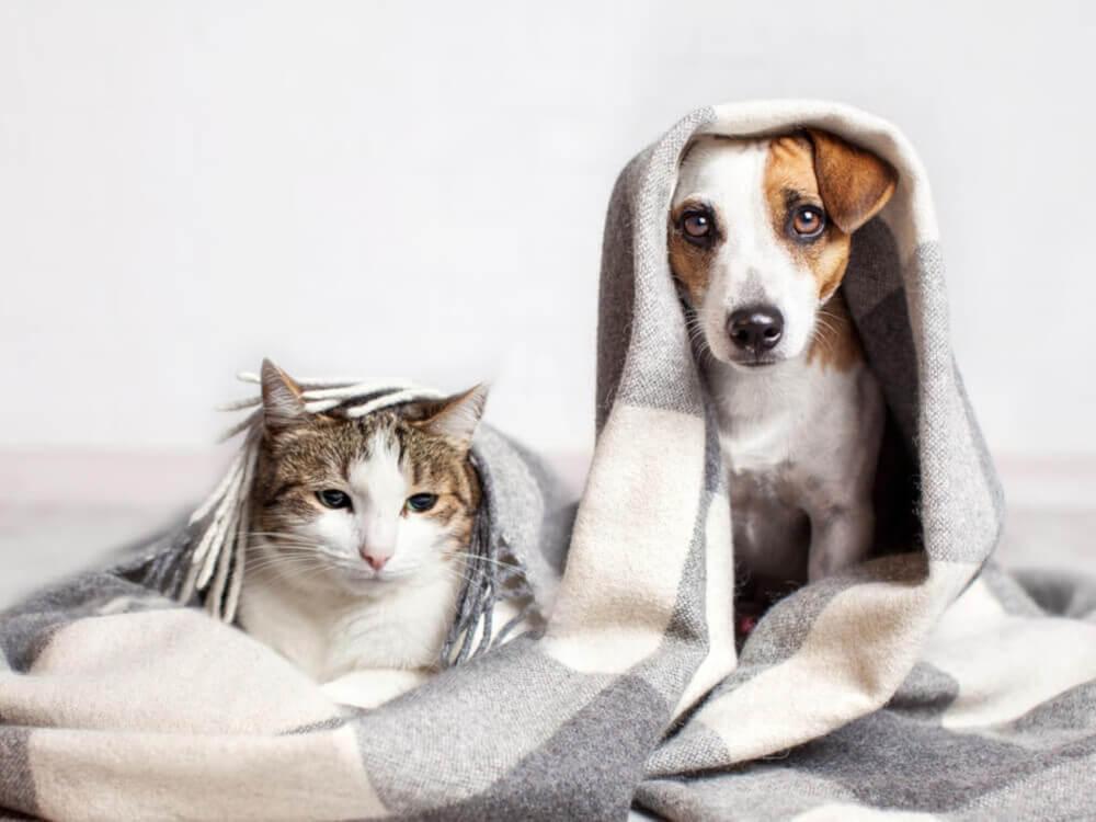 humedad en casa mascota
