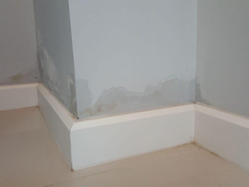 paredes-con-manchas-blancas-causas