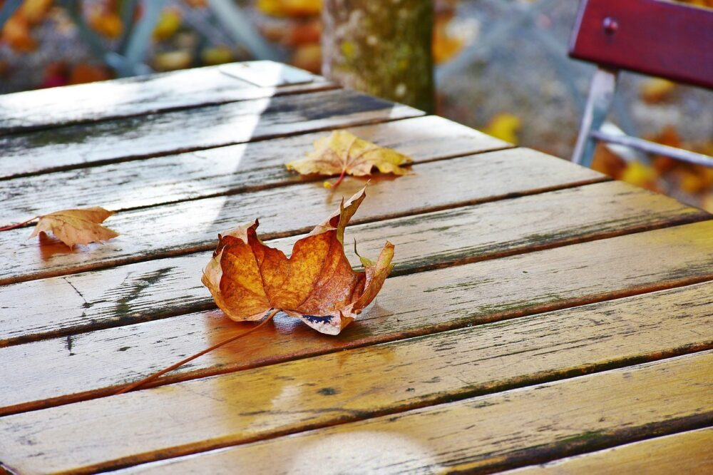 humedades-y-otoño