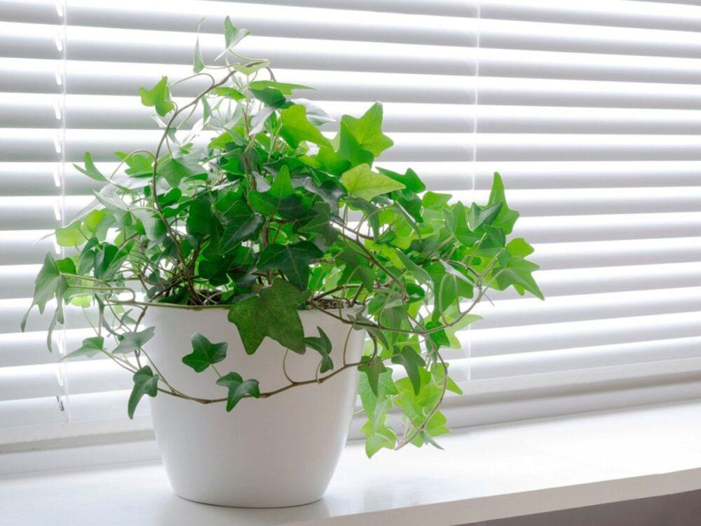 las-plantas-absorben-la-humedad