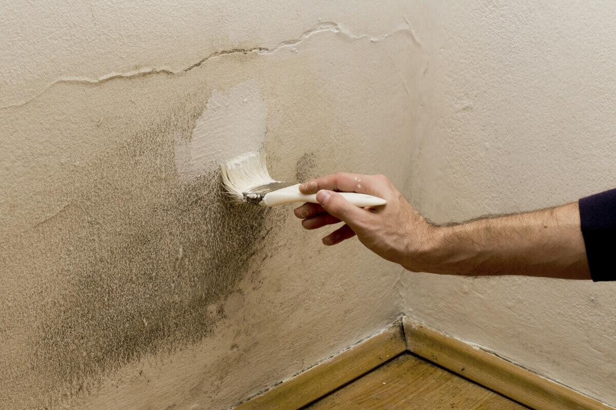 Consejos antes de pintar una pared