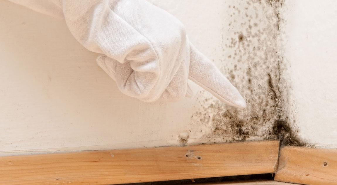 Por qué eliminar la humedad de una pared